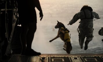 """Navy Seal"""