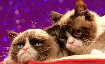 Grumpy Cat su savo vaškine figūra