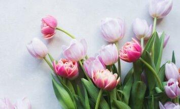 Tulpių sodinimo ir priežiūros pagrindai
