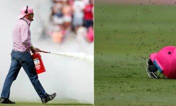 Bičių antplūdis kriketo rungtynėse
