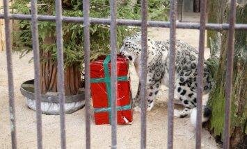 Zoologijos sodo gyvūnams – kalėdinės dovanos