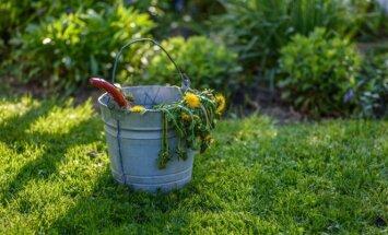 6 paprasti būdai, kaip kovoti su piktžolėmis be chemikalų