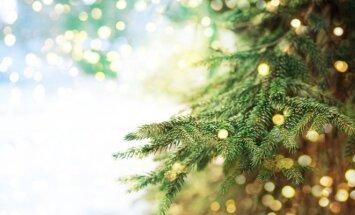 Patarimai, kaip papuošti eglutę Kalėdoms