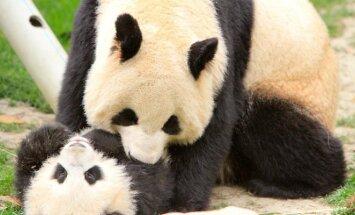 Rezervato pandos