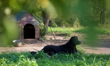 Šuo (Asociatyvi nuotr.)