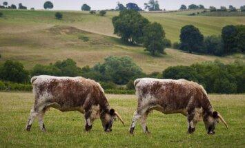 Klonuotos karvės