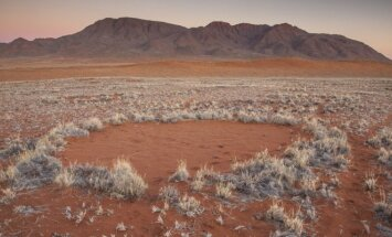 Išaiškėjo paslaptingų apskritimų Namibijoje priežastis