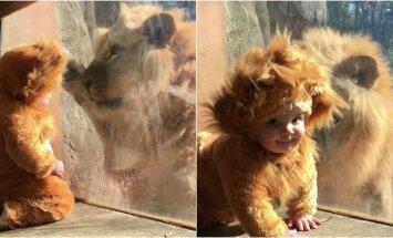 Liūto ir kūdikio draugystė