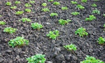 Būtiniausi darbai sode, darže, gėlyne gegužės mėnesį