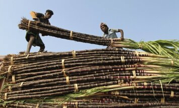 Cukranendrių ūkis