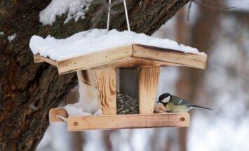 7 idėjos, kaip pagaminti nesudėtingas paukščių lesyklėles