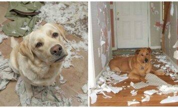 Šunys, kurie nusiaubia namus