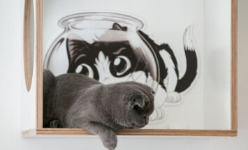Kačių kavinės atidarymas
