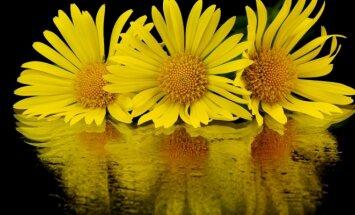 """<span style=""""color: #ff0000;"""">""""Garden Style"""":</span> olandų kraštovaizdžio dizainerė rekomenduoja auginti visų pamirštą augalą – laumenę"""