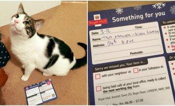 Iš katino pareikalavo asmens dokumento