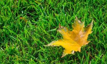 Vejos priežiūra rudenį – kaip teisingai pjauti, laistyti ir tręšti