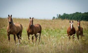 Mokslininkai: arkliai gali išsakyti savo nuomonę