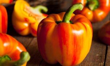 Mėgėjiškos saldžiosios paprikos veislės, kurių derlius turėtų nenuvilti