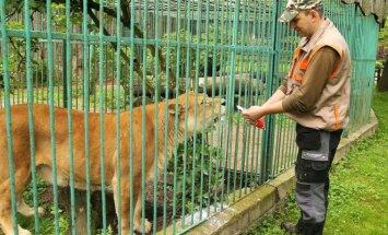 Zoologijos sodas