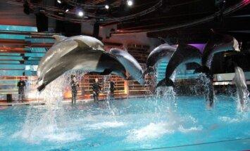 Projektas Delfinai ir žvaigždės