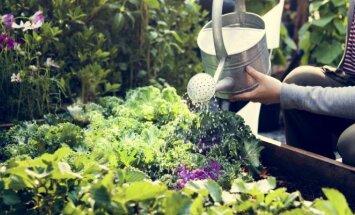"""Kokie darbai laukia darže bei sode <span style=""""color: #ff0000;"""">birželio mėnesį</span>?"""