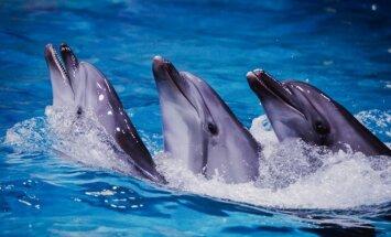 Delfinai (L.Butkevičiaus nuotr.)
