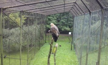 Erelis Lietuvos zoologijos sode