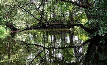 Almajos upė, plaukiant į Aseko ežerą