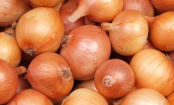 Kodėl geriau svogūnus sodinti prieš žiemą
