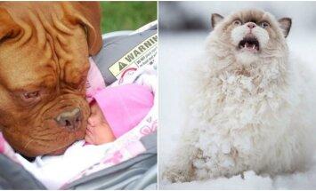 Gyvūnų reakcijos