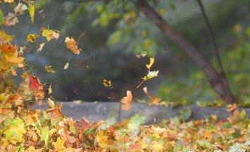 Šokantys lapai