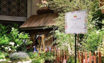 Japonijos sostinėje sužydėjo lietuviškas sodas