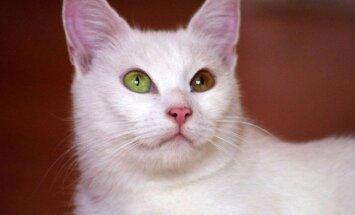 Gražuolė baltakailė Snaigė ieško namų!!!