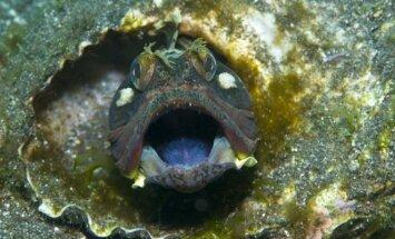 Žvejus gąsdinančios žuvys