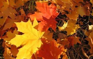 5 būdai, kaip panaudoti nukritusius lapus