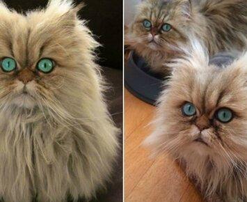 Neįtikėtino grožio kačių akys: jose galima paskęsti