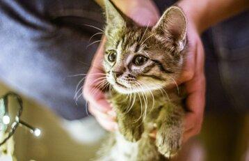Vilnietė Kristina gavo vertingą pamoką: kačių šeimininkai ją išmoksta tada, kai būna vėlu