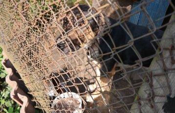 Įbauginto šuns kančios baigėsi: gelbėtojai paaiškino, kodėl skriaudėjai liks nenubausti