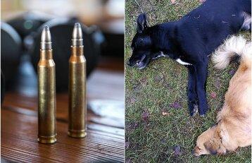 Medžiotojų šventė kaime baigėsi iššaudytais šunimis: dabar baisu ir į kiemą išeit