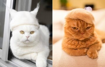 Katės su kepurėmis tapo tikra interneto sensacija