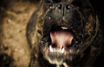 Kaimynų ramybę trikdantis šuo gali užtraukti baudą: ką turi žinoti šeimininkai