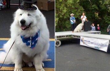 Būna ir taip: miestelio meru trečią kartą išrinktas šuo