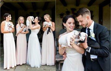 Vestuves nusprendė atšvęsti kitaip: vietoje puokščių pasirinko šuniukus