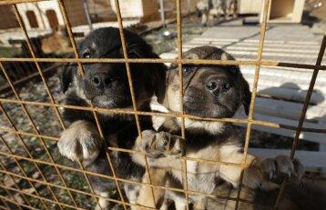 Siūlo griežtinti nuobaudas už gyvūnų gerovės pažeidimus
