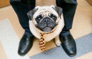 <em>Purina</em> socialinis projektas: gyvūnams draugiškų įmonių laukia malonios staigmenos