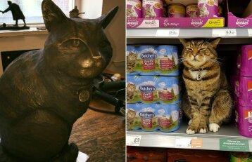 Katinas kasdien apsilankydavo parduotuvėje: jo atminimui pastatė bronzinę skulptūrą