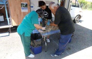 Iš Rumunijos galime kai ko pasimokyti: mobili klinika, kuri padeda gyvūnams