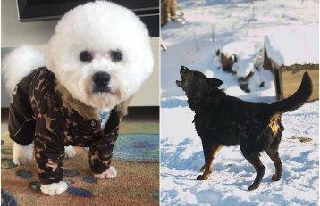 Šalčiai gyvūnams gali skaudžiai įkąsti: kokias klaidas šeimininkai daro žiemą?
