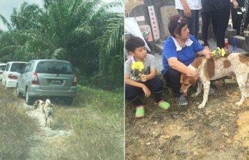 Neįtikėtina šuns ištikimybė: atsekė į paskutinį atsisveikinimą su šeimininke