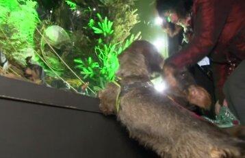 Vokietijoje duris atverė taksų veislės šuneliams skirtas muziejus